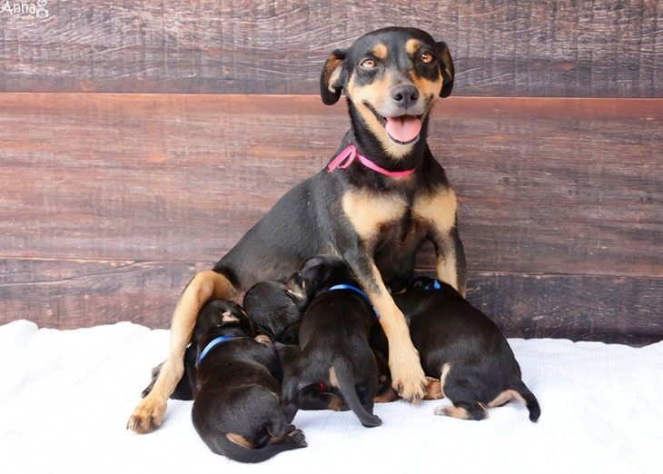 lilica sonriendo a la camara mientras sus cachorritos comen