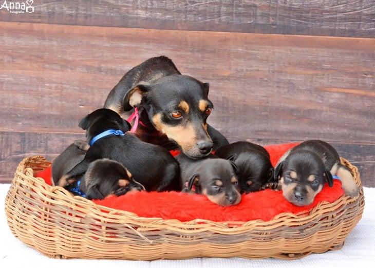lilica y sus 5 cachorros