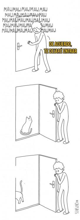 gato maullando afuera, abren la puerta y se va