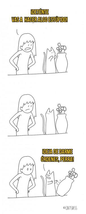 mujer ordenándole a su gato no tirar la maceta, el gato la tira