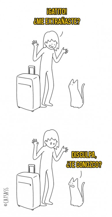 mujer le pregunta a gato si la extrañó