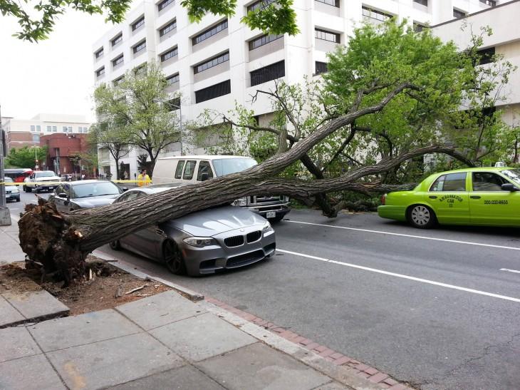 tronco de árbol sobre bmw