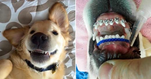 Perro con frenos