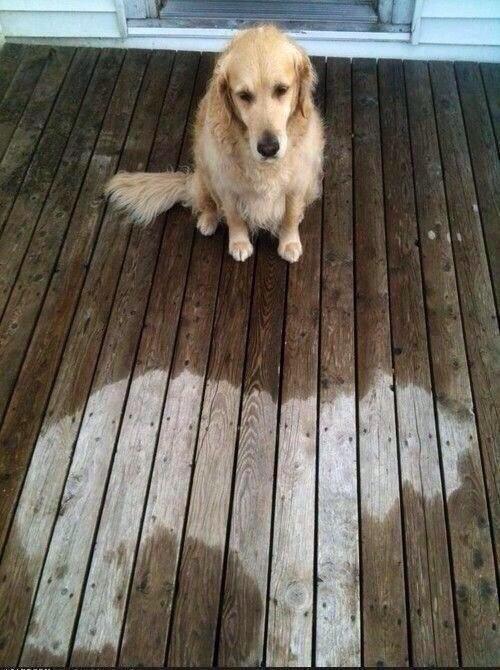 ¿Llovió?