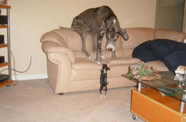 Perro grande atemorizado por un cachorrito