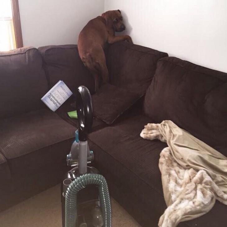 perro asustado de una aspiradora