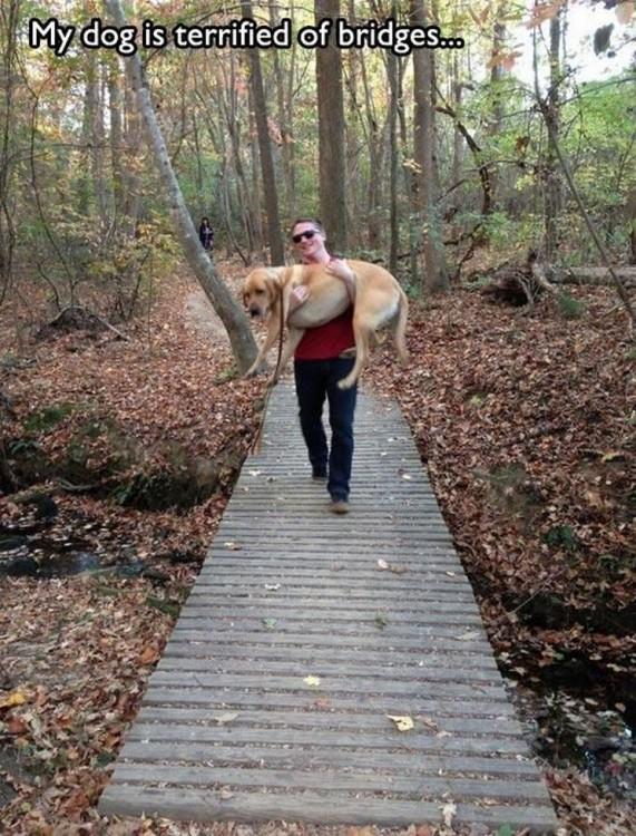 dueño carga a su perro que le tiene miedo a los puentes