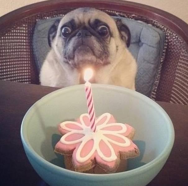 perro pug petrificado por una vela de cumpleaños