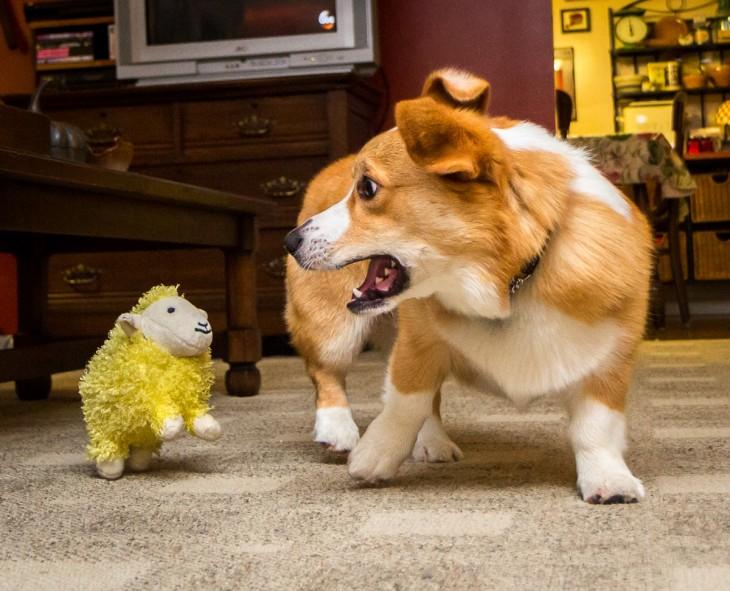 perro asustado por un borrego de peluche