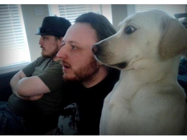 Perro asustado por algo que está viendo