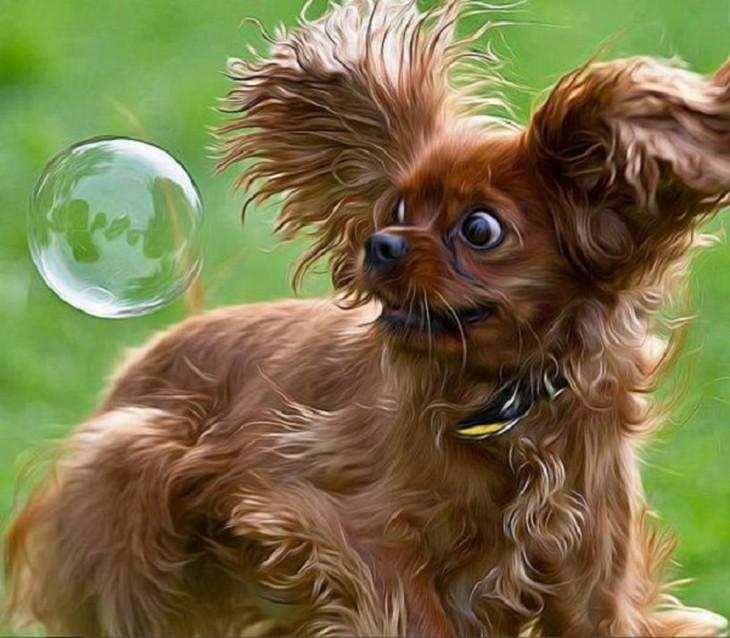 Perro ve burbuja de jabón con cara de miedo