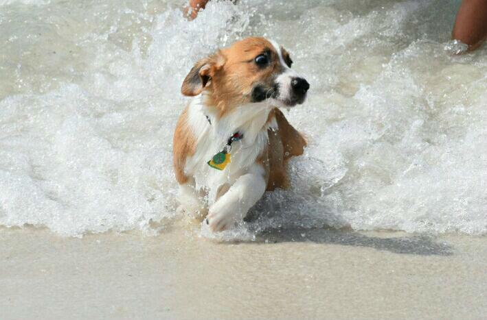 Perro trata de huir del agua