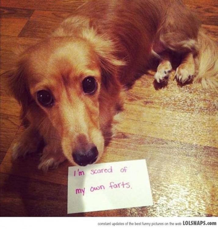 Perro con una nota que dice que le asustan sus propias flatulencias