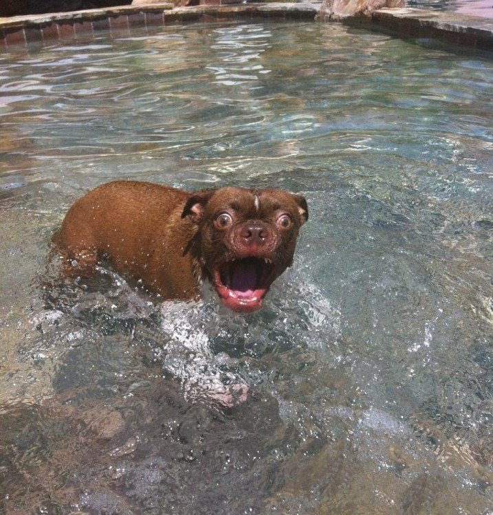 Perro con cara de susto mientras está en una alberca