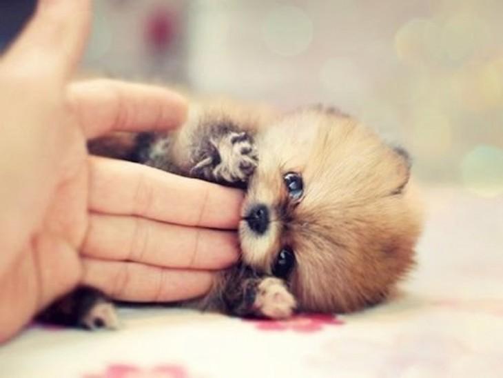 perro chiquito cosquillas