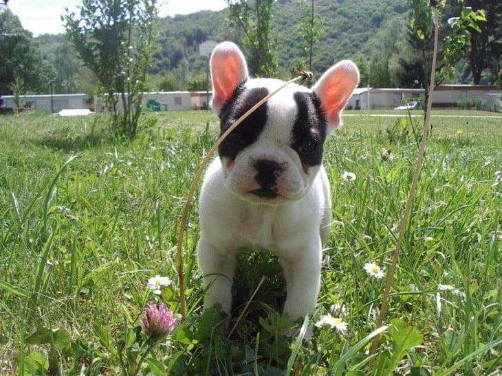 perro blanco y negro en jardín