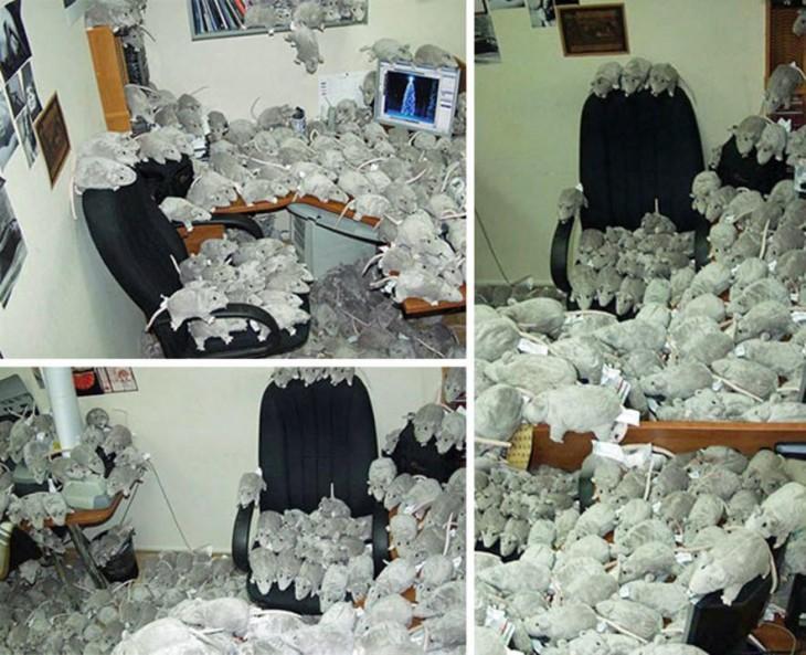 oficina llena de ratas de peluche.