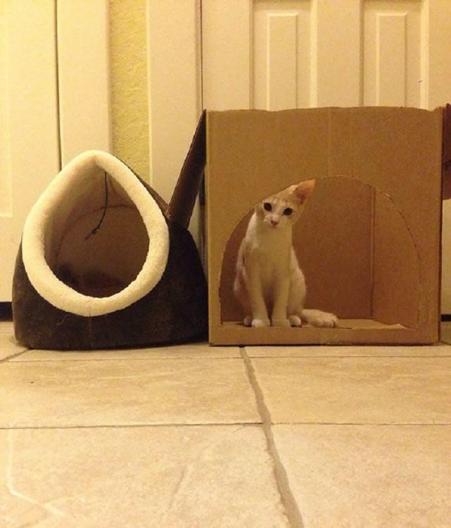 gato tranquilamente en una caja sin querer entrar a su cama