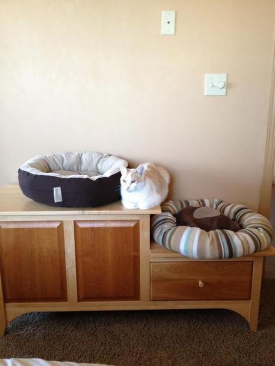 gato con dos camas duerme en un rincón de un mueble