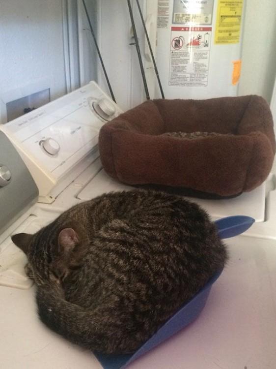gato prefiere dormir en un recogedor que sobre su cama