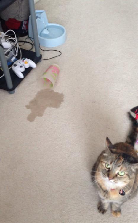 gato derramó agua por no beber en su fuente