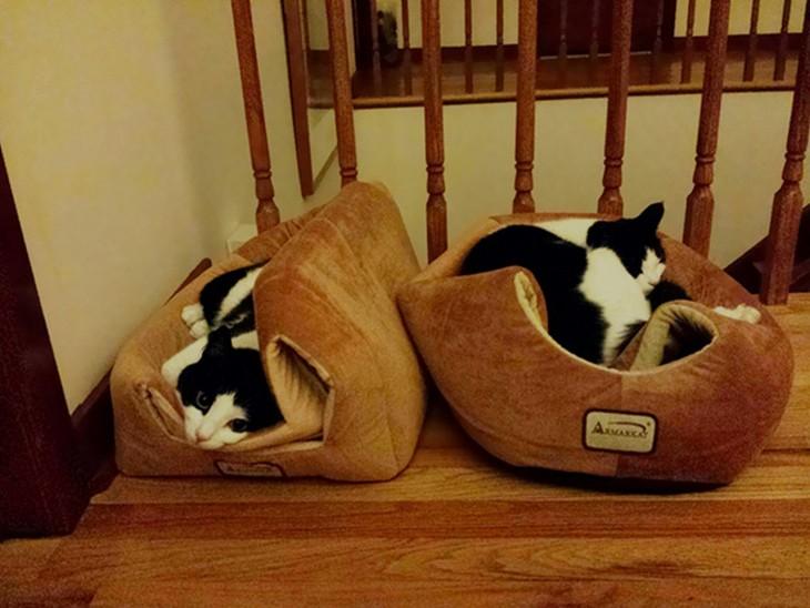 gatos que se rehúsan a dormir dentro de su cama, sino sobre ella