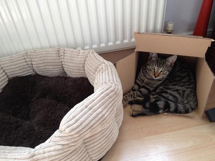 gato prefiere dormir en caja que en su cama
