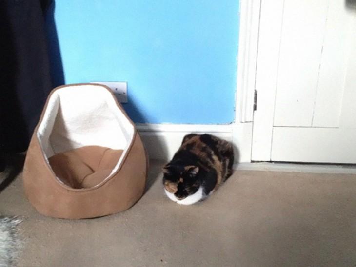 gato prefiere dormir en el piso que en su cama