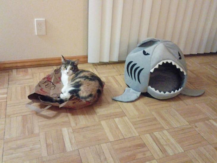 gato sobre una bolsa de cartón en lugar de su cama