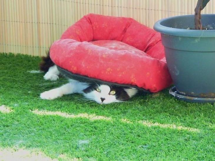 gato recostado debajo de su cama