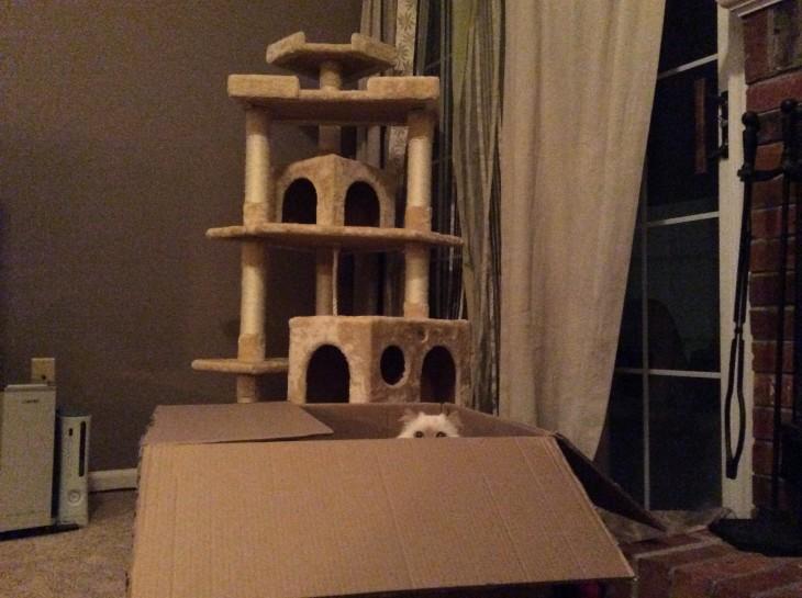 gato prefiere jugar en una caja que en un juego para trepar