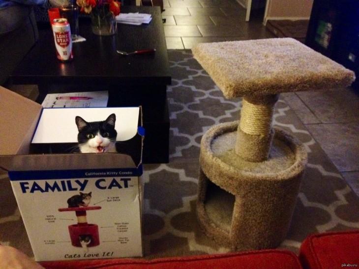 gato se burla de su dueño cuando no usa su regalo