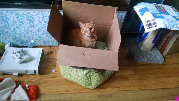 Gato dentro de caja sobre su cama