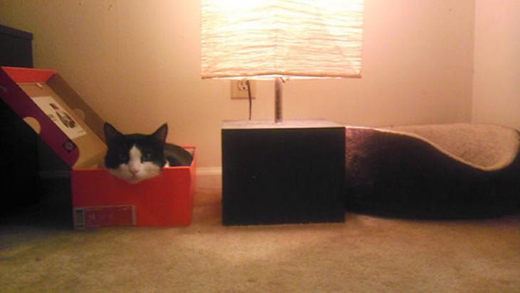 gato prefiere dormir en una caja de zapatos, no en una cama para él