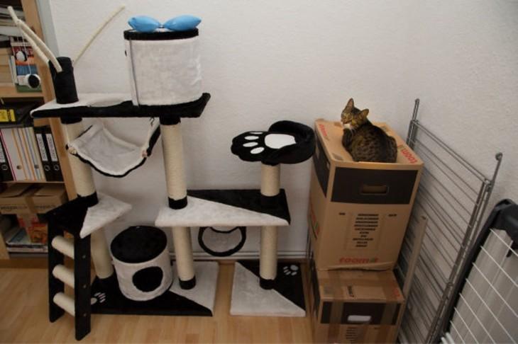 gato prefiere cajas a un juego nuevo