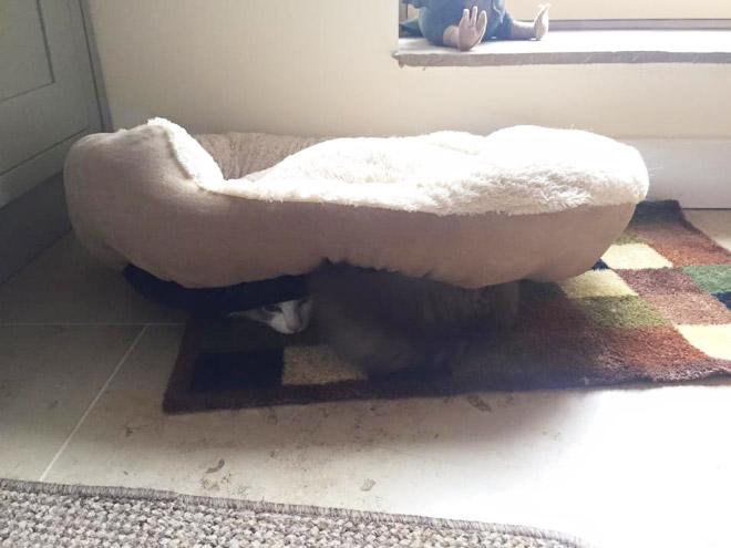 gato duerme debajo de su cama