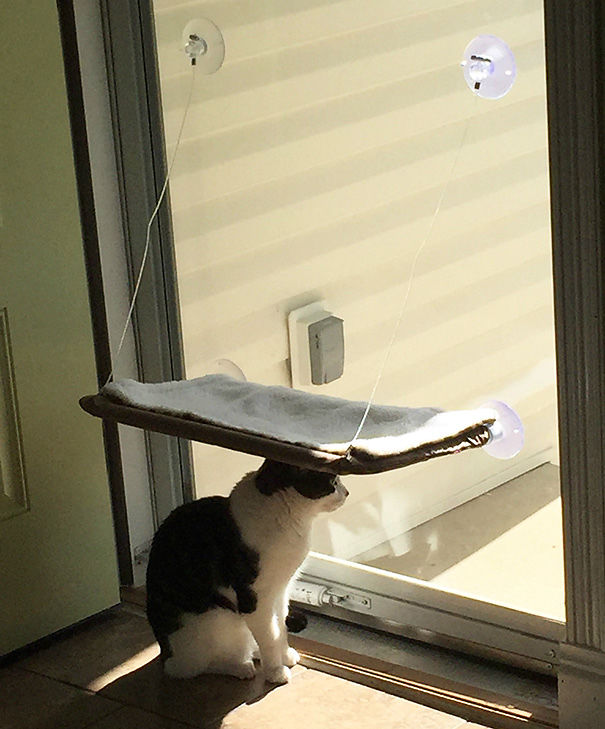 regalos para gatos (9)