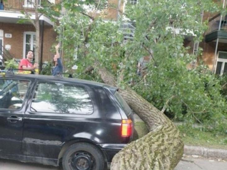 Árvore cai, mas não bateu o carro