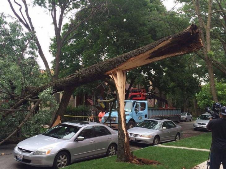 Árvore cai, mas não toca o carro por baixo