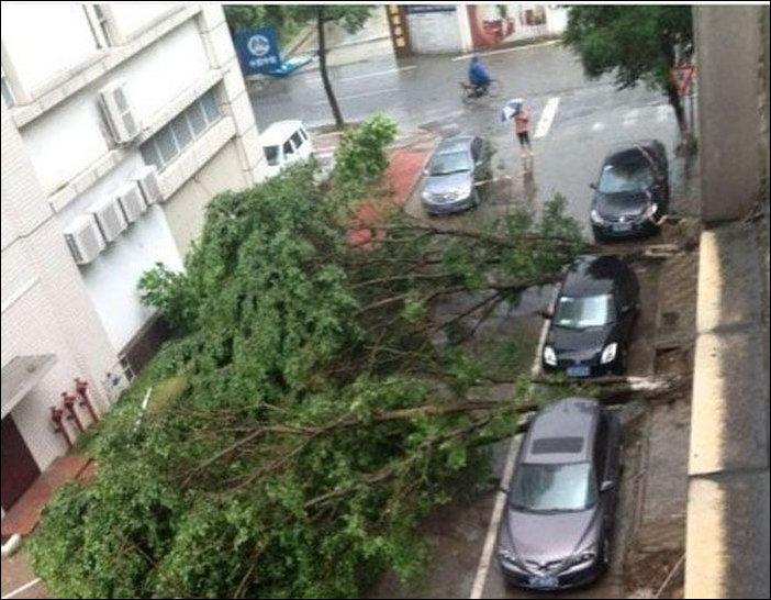 duas árvores corretas entre carros estacionados cair