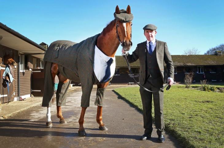 caballo con traje tweed en caballerizas