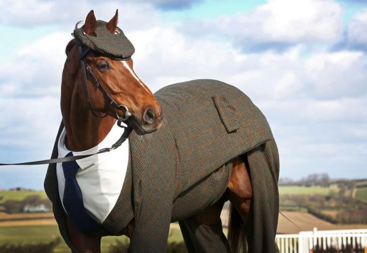 confeccionan traje tweed para caballo en Inglaterra