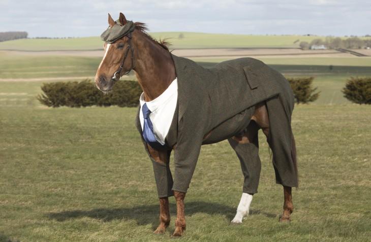 caballo con traje tweed, camisa, gorro y corbata azul