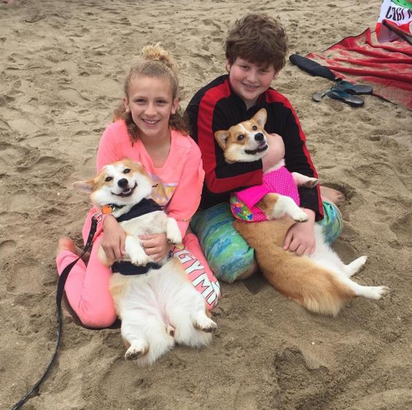 dos corgis en la playa mientras dos niños los abrazan