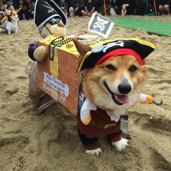 corgi en la playa disfrazado de pirata
