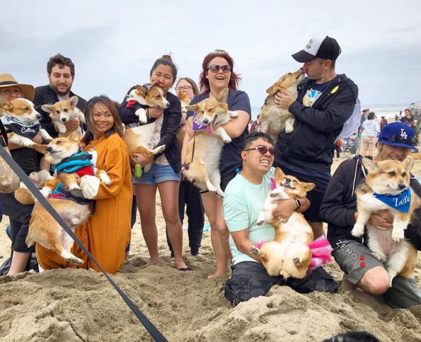 foto de corgis con sus dueños en la playa