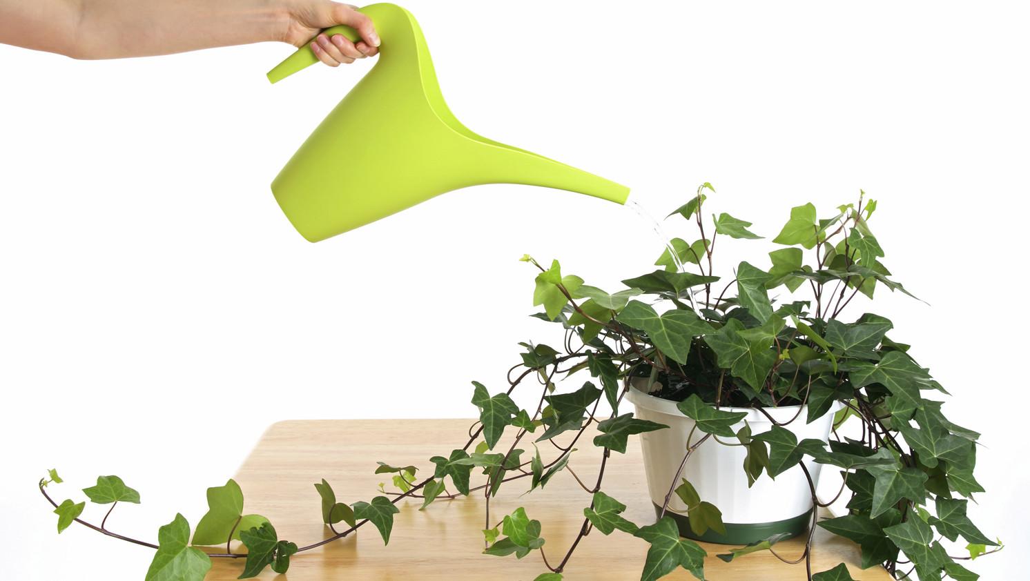 10 Incre Bles Plantas Que Pueden Limpiar El Aire De Tu Hogar ~ Plantas Que Limpian El Ambiente