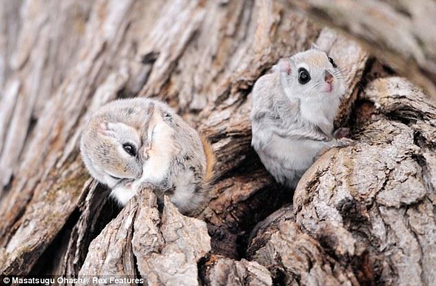 Conjunto de ardillas en un tronco