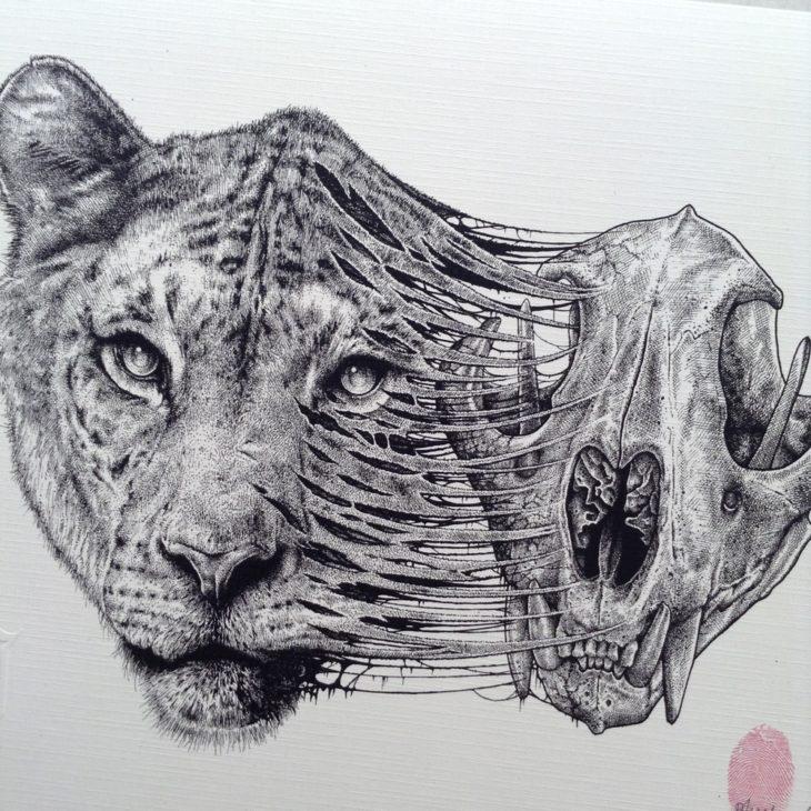 dibujo del esqueleto de la cabeza de un león desprendiéndose de su cabeza