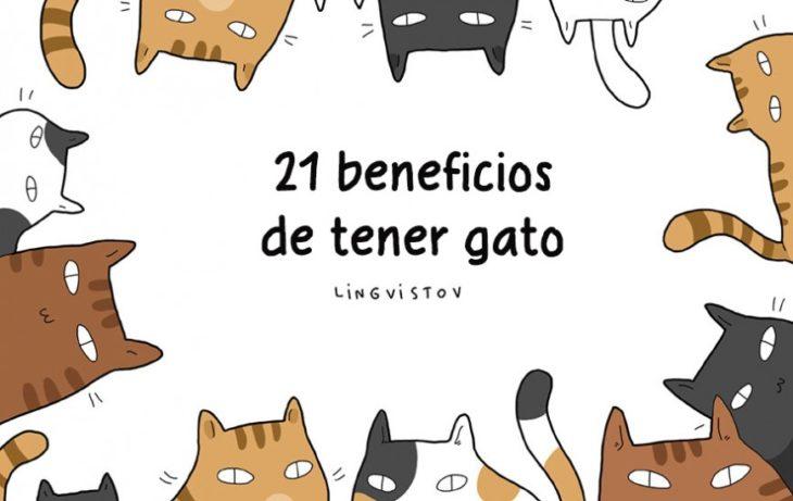21 BENEFICIOS DE TENER UN GATO